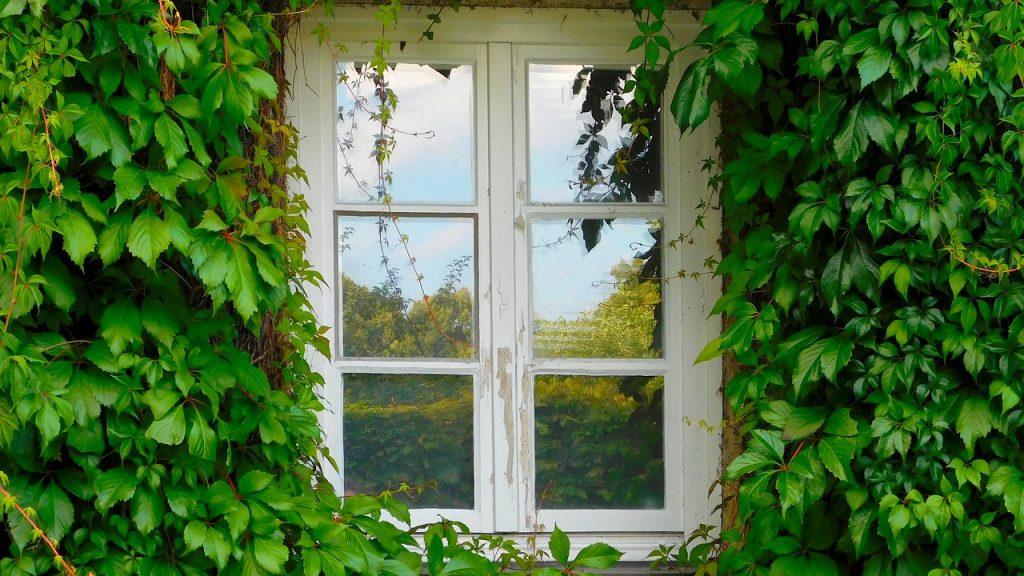 Vue extérieure d'une fenêtre blanche d'une maison habillée de lierre
